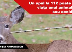 În cazul în care vedeți animale rănite în spațiul public, puteți suna la 112 pentru salvarea lor